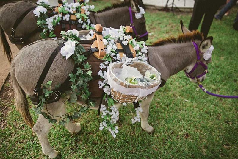 party-donkeys-texas